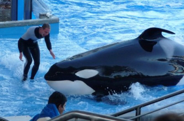 SeaWorld workers get bad news ahead of holidays